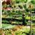 Seven Oaks Plant Shop