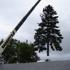 Barrett's Tree Service