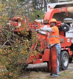 Casey Tree Experts Inc - Stone Mountain, GA
