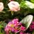 Flamingo's Flowers