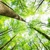 Arborist Services By Dujets Tree Experts Inc.