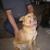 Farmington Pet Adoption Center