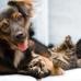 Kennett Veterinary Clinic