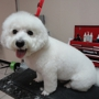 A Shampoochies Dog Grooming And Spa LLC