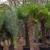 Alfaro Tree Sales Inc