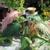 Cat's Gardens