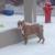 Topdog Pet Care