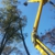 A Plus Tree & Crane Services Inc