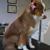 The Dog Pamperer Grooming Salon