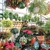 Potratz Floral Shop & Greenhouses