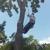 Dallas Jose Tree Service