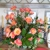Sally's Flower Shoppe