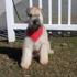 A Doggie Day Spa