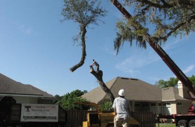 Tree Work by Mitch Drake & Sons - Jacksonville, FL