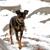 Pix4Paws Pet Photography Services