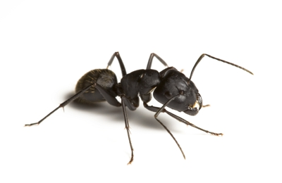 Heritage Termite & Pest Services Inc - Knoxville, TN