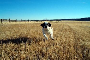 New Freedom Dog Training