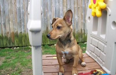 Best Friends Pet Care - Windsor, NJ