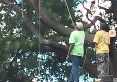 Sams Tree Service 6009 Blackhawk Trl SE, Mableton, GA 30126 - YP com