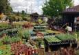Urban Tree Farm Nursery - Fulton, CA