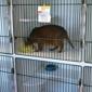 Cat Clinic The - Honolulu, HI