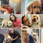Downtown Pet Hospital - Orlando, FL. Our wonderful techs with some faves!