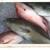 Northwest Florida Dolphin and Fishing Tours LLC