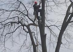 Zamora Tree Sevice - Birmingham, AL