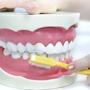 New England Dental Specialists