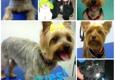 Sunny Dawn House Call Pet Grooming - Sarasota, FL
