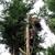Roscoe Brothers Tree Service