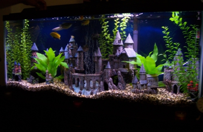Totally Tanked Aquarium Services Antioch Ca
