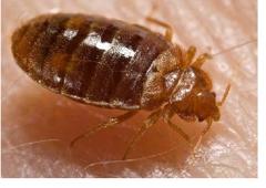 Budget Brothers Termite & Pest Elimination Phoenix, AZ 85022 - YP.com