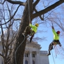 Boley Tree & Landscape Care Inc - Middleton, WI