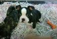 Love My Puppies - Wantagh, NY