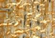Action Termite & Pest Control - Portsmouth, VA