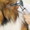 Central Bucks Mobile Veterinary Clinic, PC
