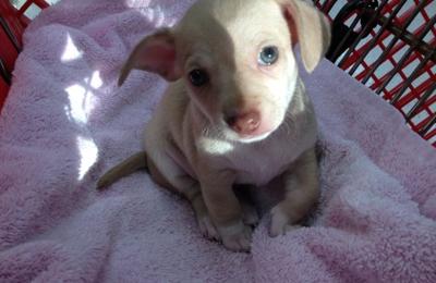 Pet Care Center Inc - Metairie, LA