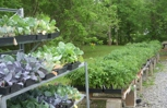 Ooodles of locally-grown young spring vegetable plantings.  VERY wide variety of tomato breeds from which to select.