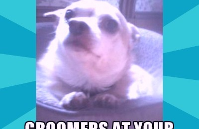 Groomers at YOUR door (BASIC pet mobile grooming) - Rochester, NY