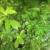 Botanica Ibu Kole5,LLC