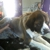 Mandy's Mobile Pet Grooming Salon