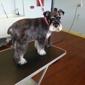 Doggy Clips - nampa, ID