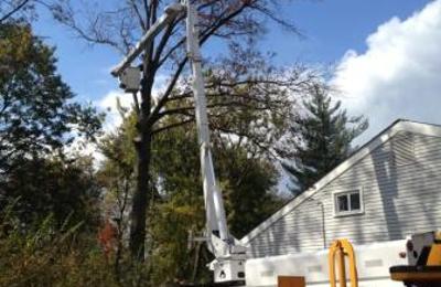 Chaz's Tree Service - Broomall, PA