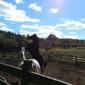 Wash Quarters Horse Blanket Cleaning & Repair - Wallkill, NY. Nikkel Farm