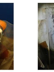 Mold Inspection & Testing Palm Beach FL