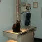 Forest Park Veterinary Clinic - Columbus, OH