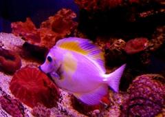 Living Reef Aquariums   Oakland Park, FL