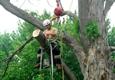 True Cut Tree Service - Farmington Hills, MI