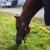 Foxcote Show Horses